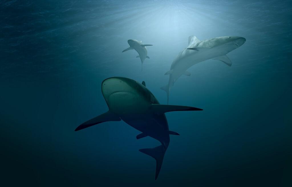 Are sharks mammals photo